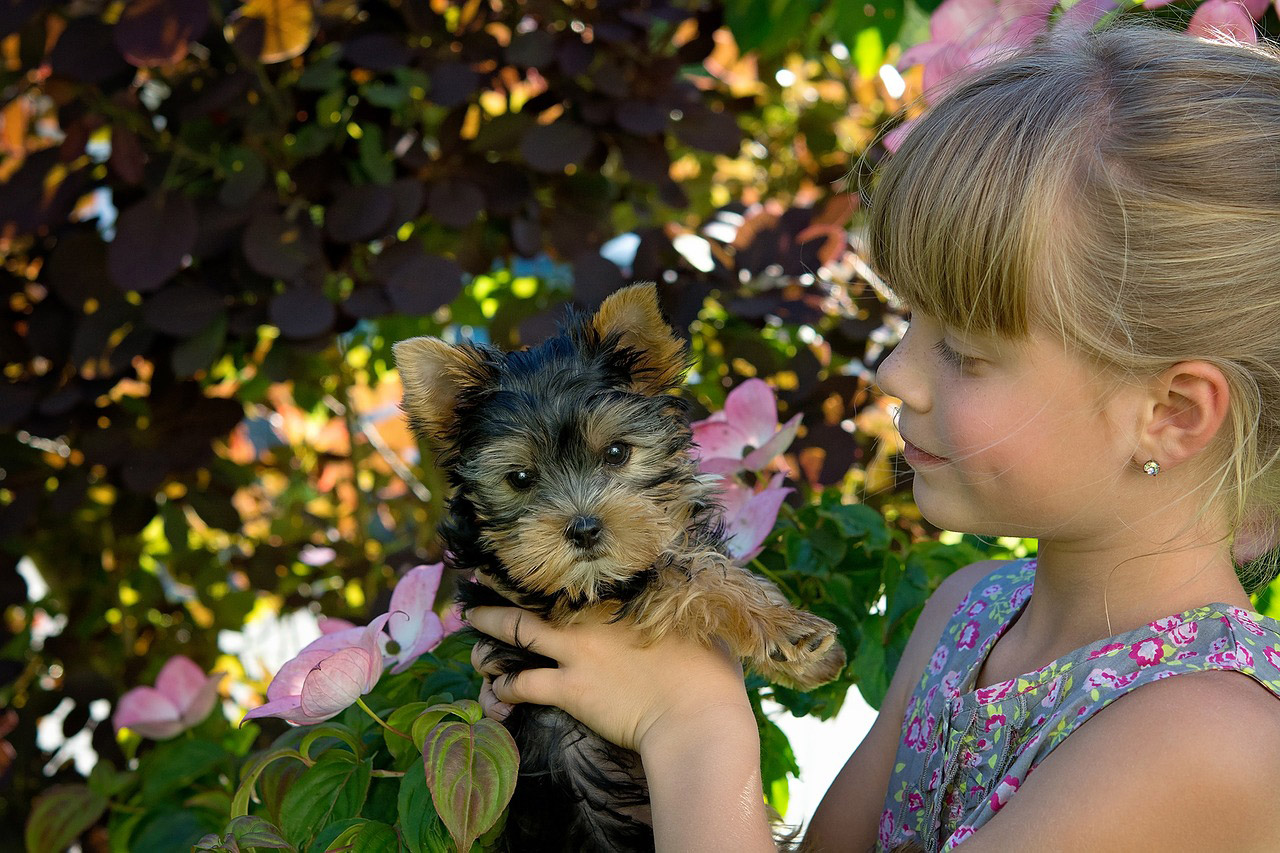 child-girl-blond-dog-puppy