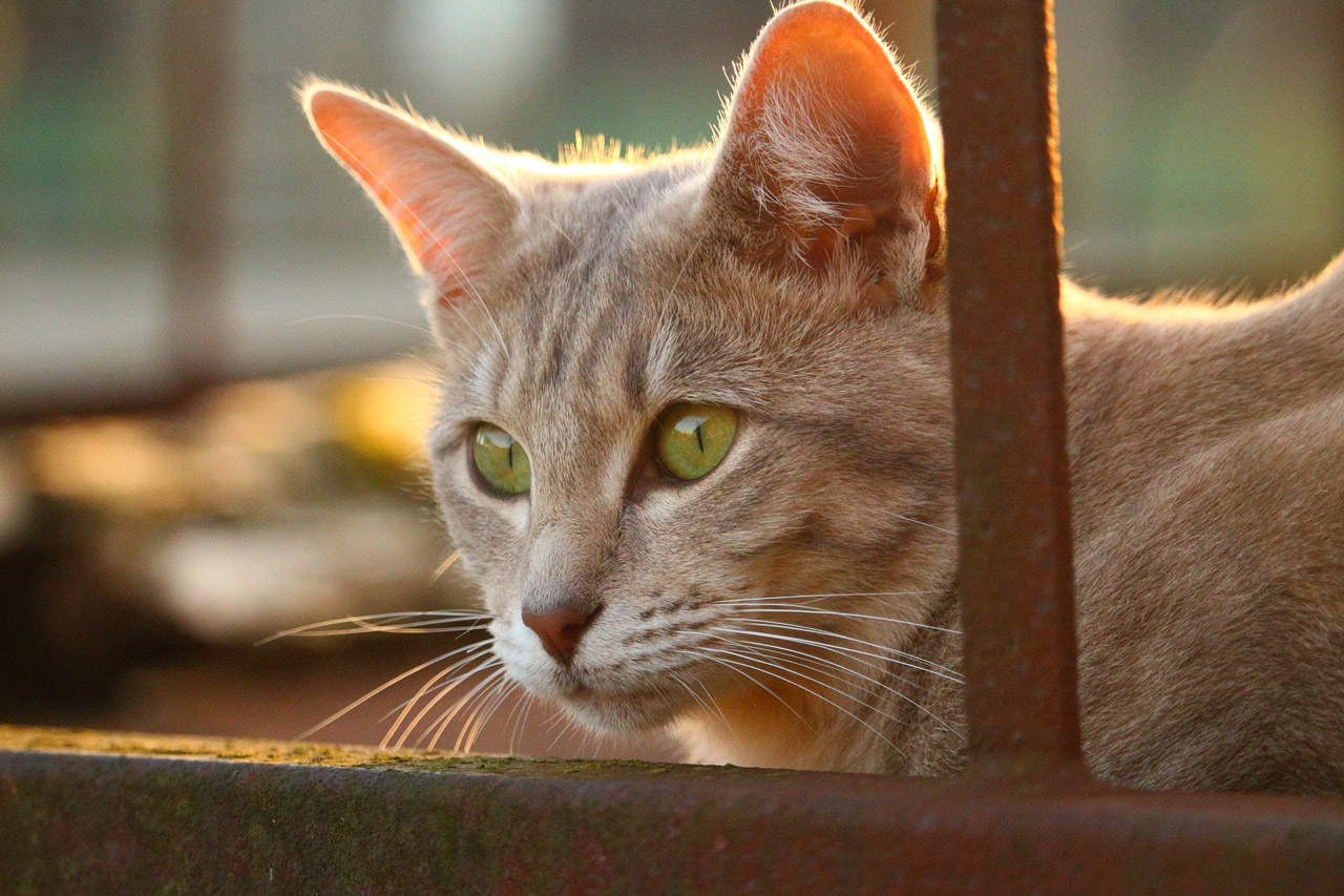 cat-eyes-autumn-rust-old-cat-face