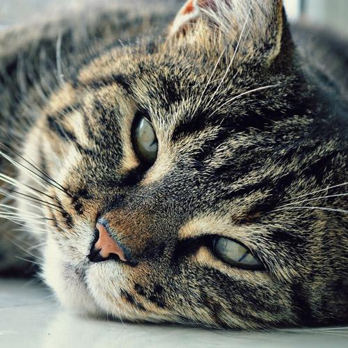 cat-eyes-cat-person-muzzle-cat