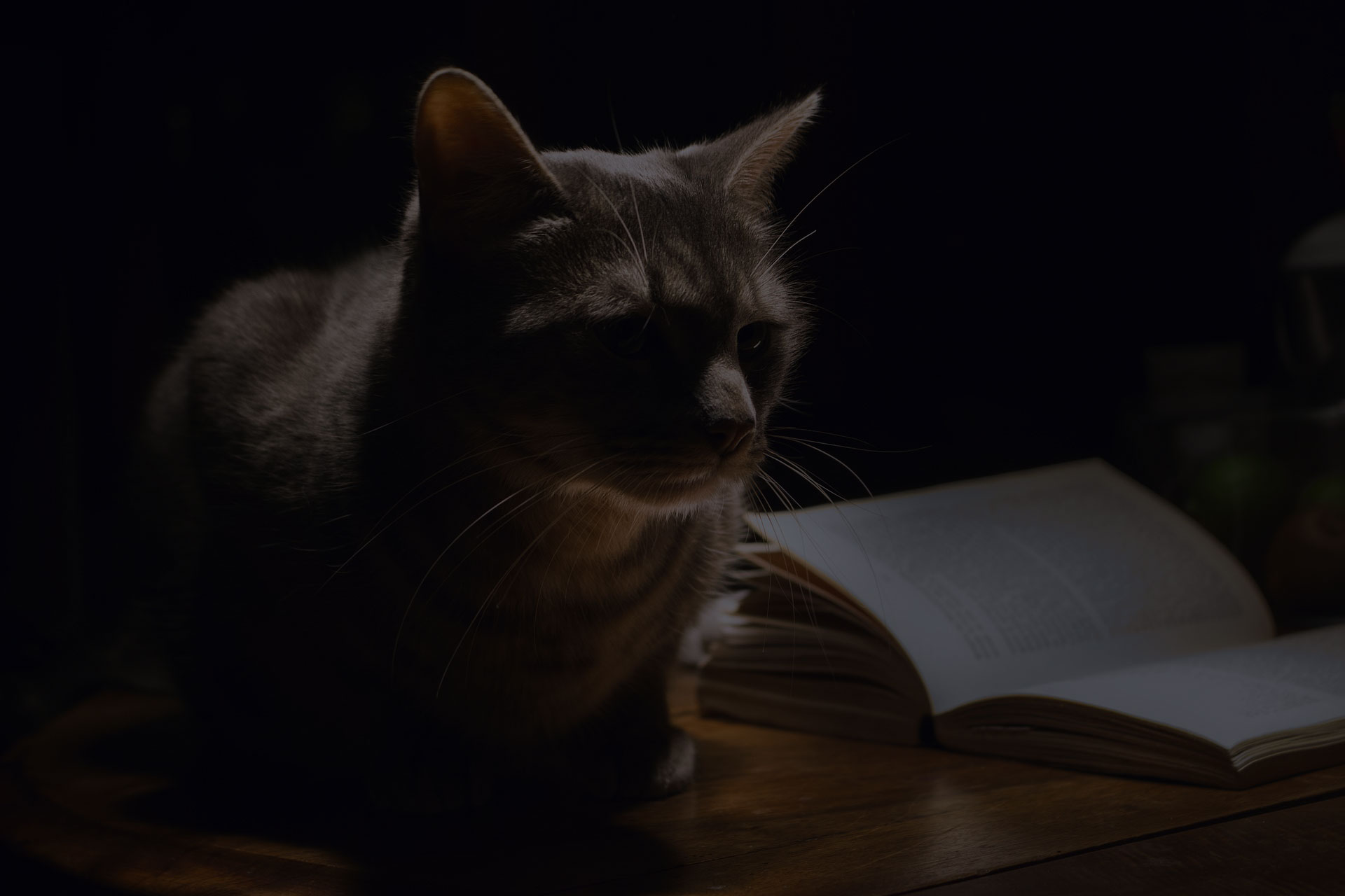 Grey Taby cat lying next to book
